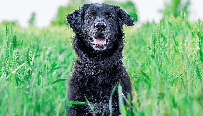 Dog protecting the yard