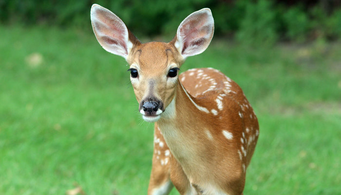 Image for Natural Ways To Keep Deer Out Of Your Garden
