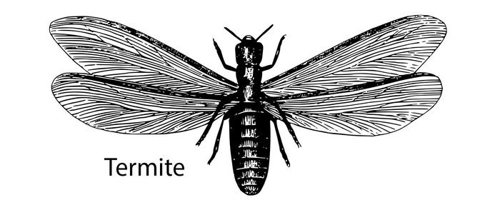 this is a termite
