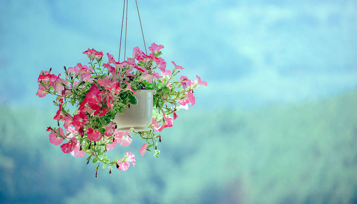Image for Elevate Your Gardening Game By Growing In Hanging Baskets