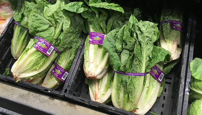 Image for Ignore the Recalls — Grow Your Own Romaine Lettuce
