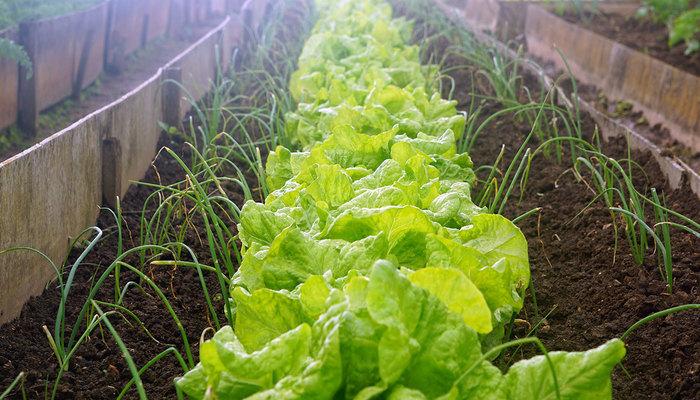 Image for Can I Still Start A Vegetable Garden In September?