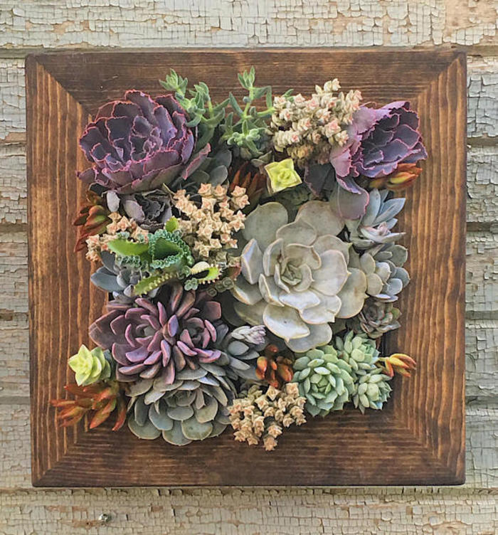 Living Wall Planter Gift Idea