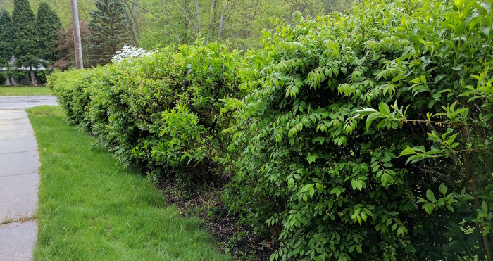 Image for Timing, Tools, and Tips for Pruning your Shrubs